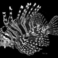 Lionfish Scratch Board